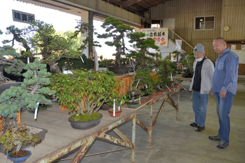 盆栽を熱心に品定めする来場者=香川県高松市鬼無町、県鬼無植木盆栽センター