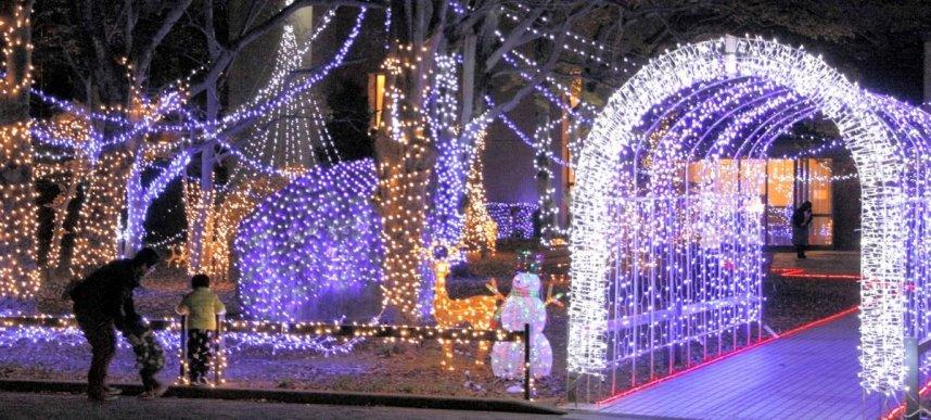 学生主体で飾り付けた5万5千個のLEDなどが輝く四国学院大のキャンパス=善通寺市文京町