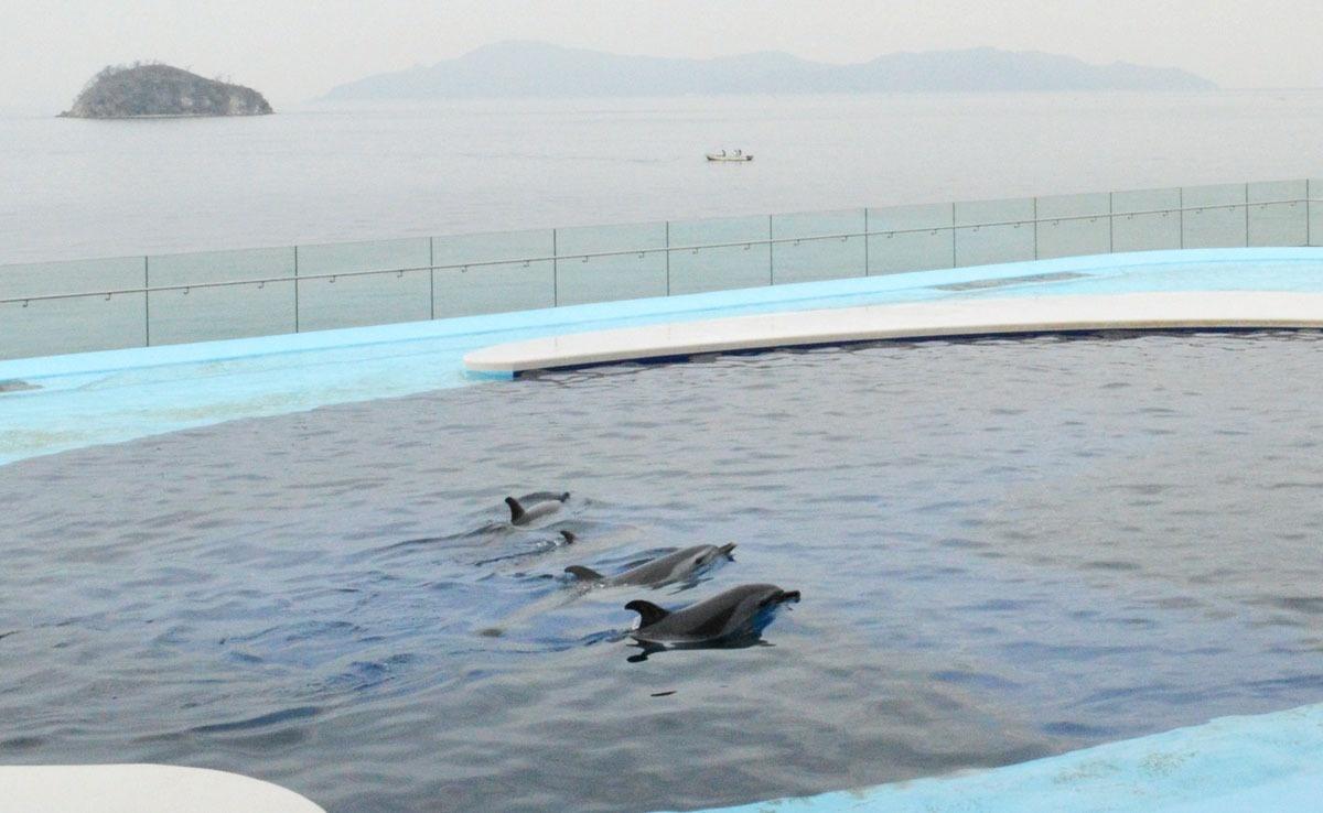 オープン 四国 水族館