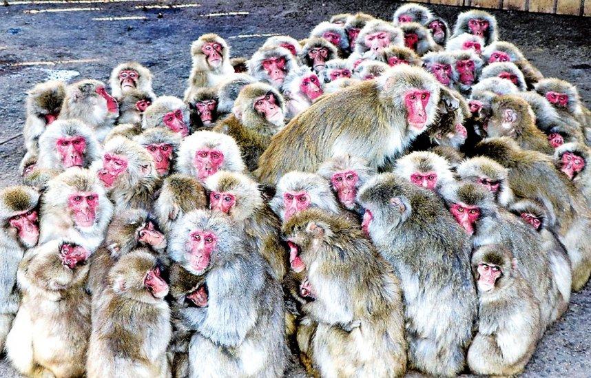 体を寄せ合い、寒さをしのぐサルたち=香川県土庄町肥土山、お猿の国