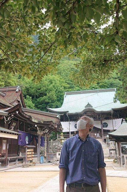 境内を彩るボダイジュの花=香川県高松市牟礼町、八栗寺