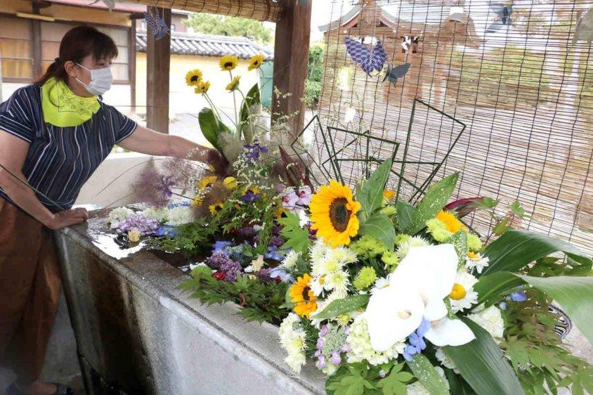 アジサイなどを飾り付けて花手水を完成させるメンバー=香川県善通寺市、総本山善通寺